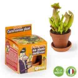 Comment réhydrater une plante?