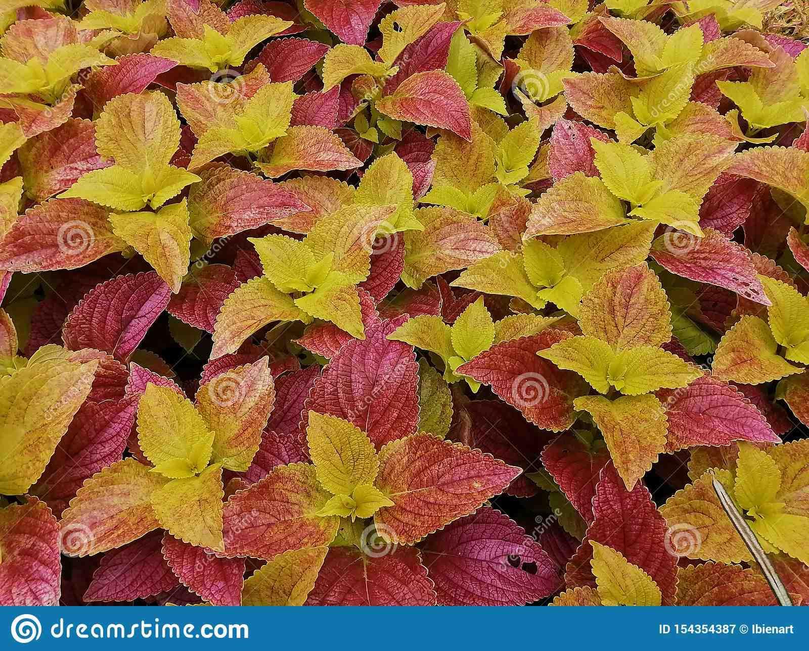 Comment sauver une plante jaune?