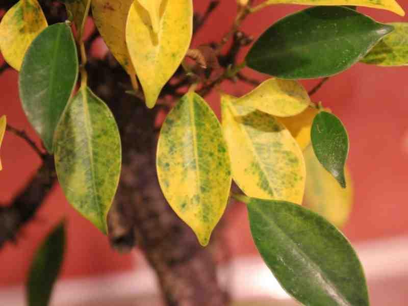 Comment savoir si une plante a besoin d'eau?