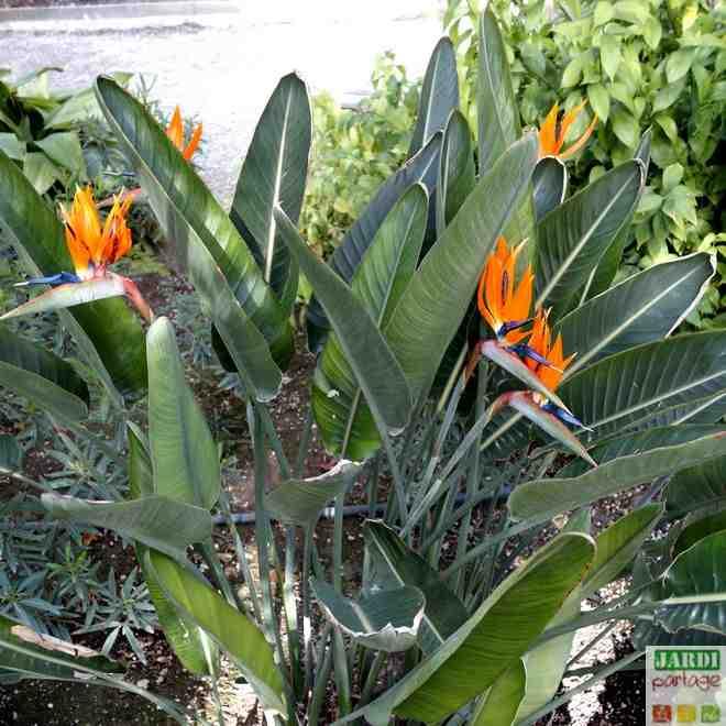 Comment savoir si une plante est malade?