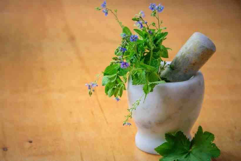 Comment traiter les plantes naturellement?