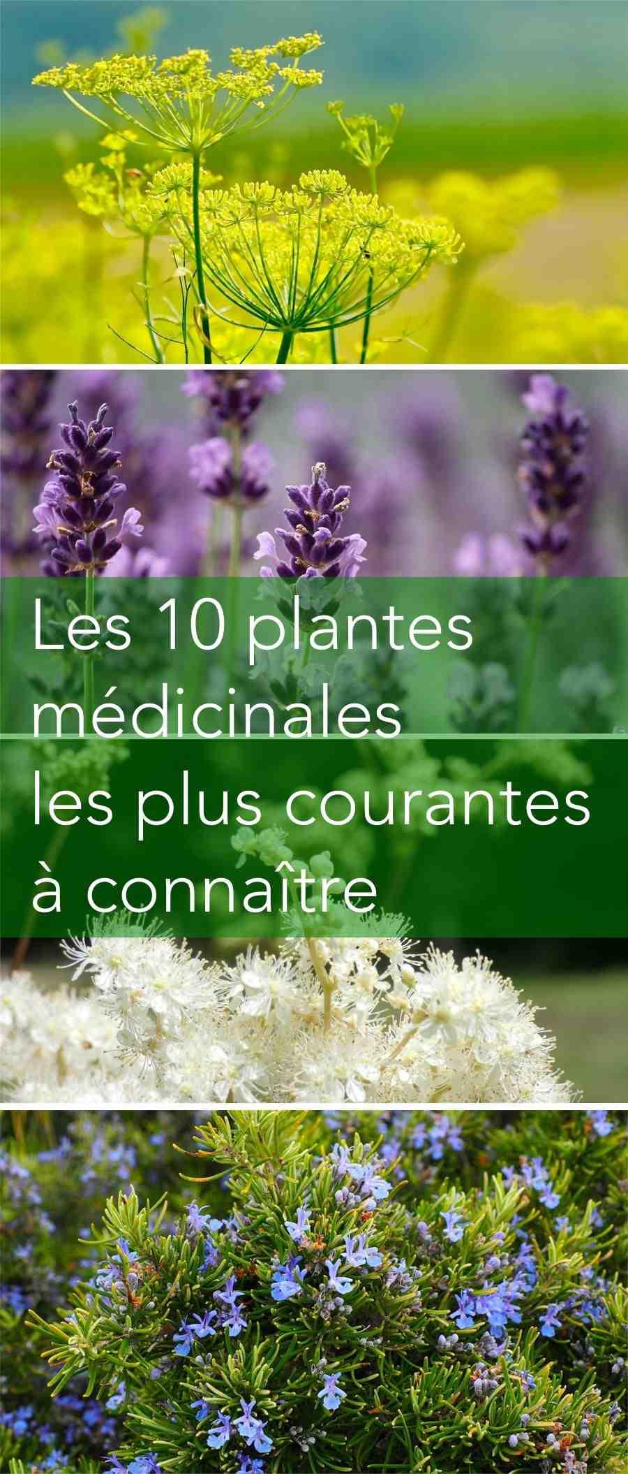Où trouver des plantes médicinales?