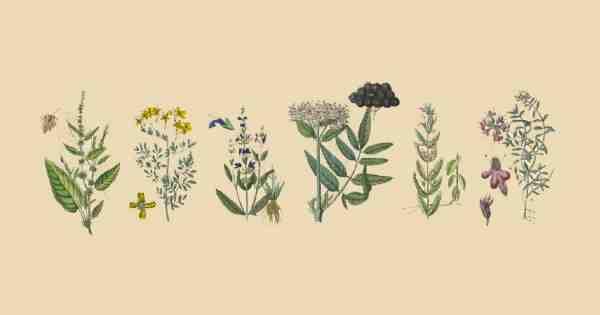 Pourquoi les gens sont-ils traités avec des plantes médicinales?