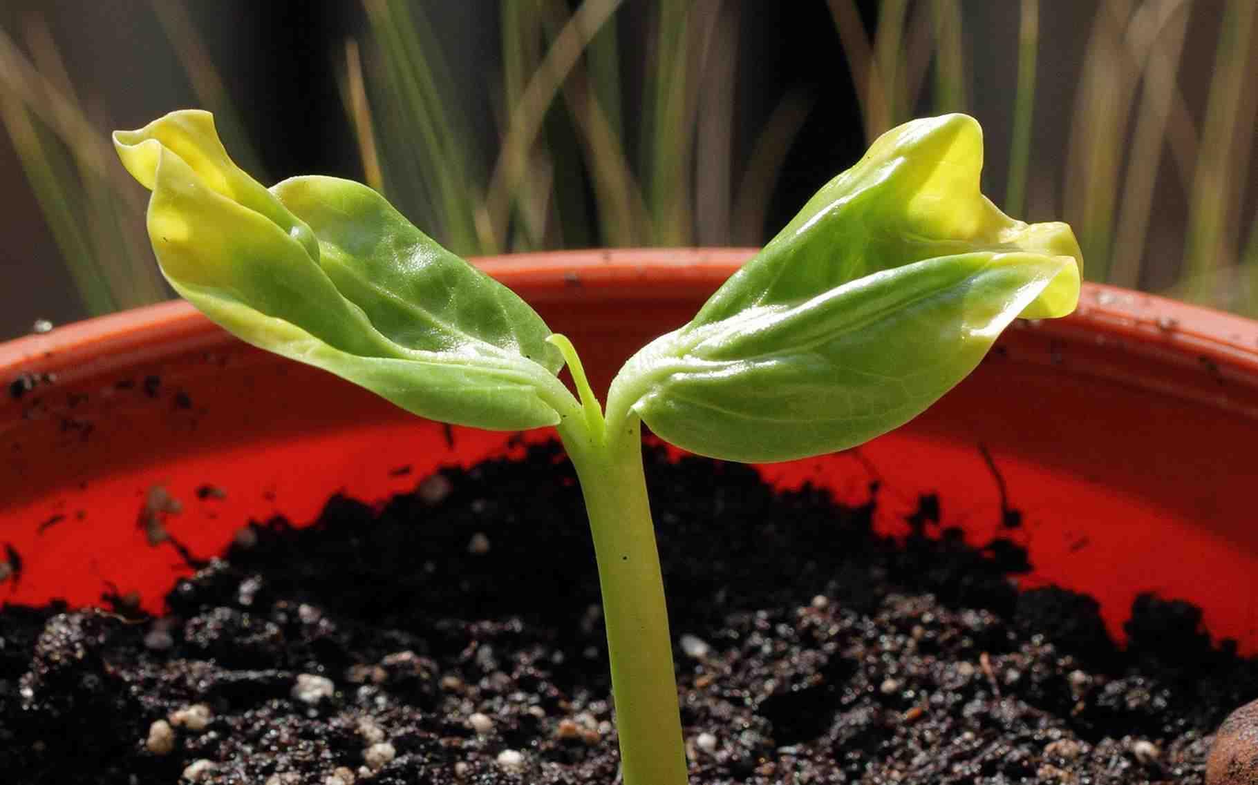 Quel engrais naturel pour les plantes vertes?