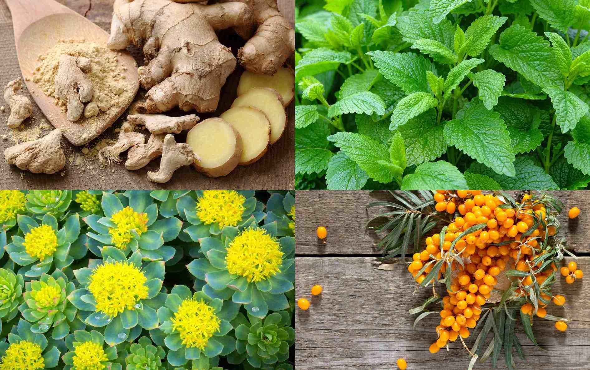 Quel est l'anti-inflammatoire naturel le plus efficace?