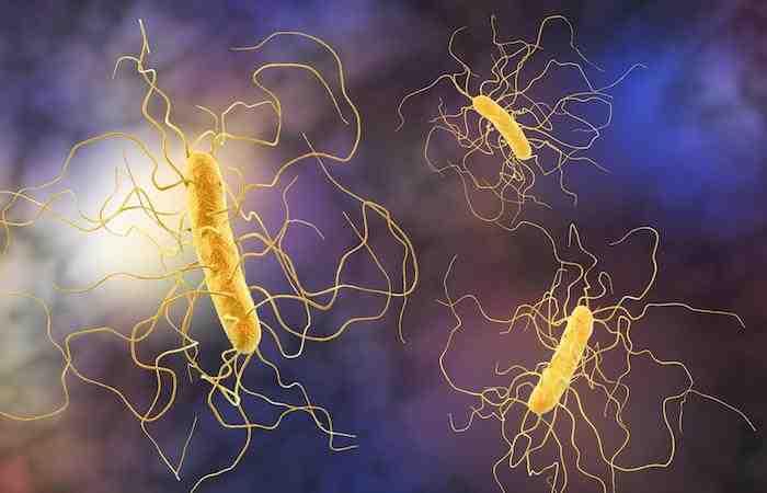 Quel est le meilleur antibiotique pour les infections urinaires?