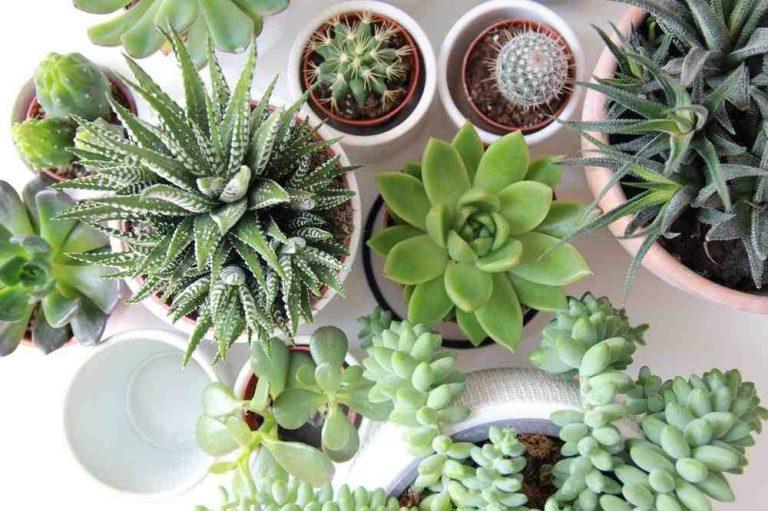 Quelle plante pour quelle maladie ?