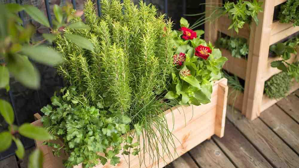Quelles plantes guérissent?