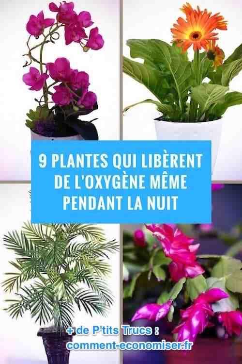 Quelles sont les meilleures plantes pour la santé ?