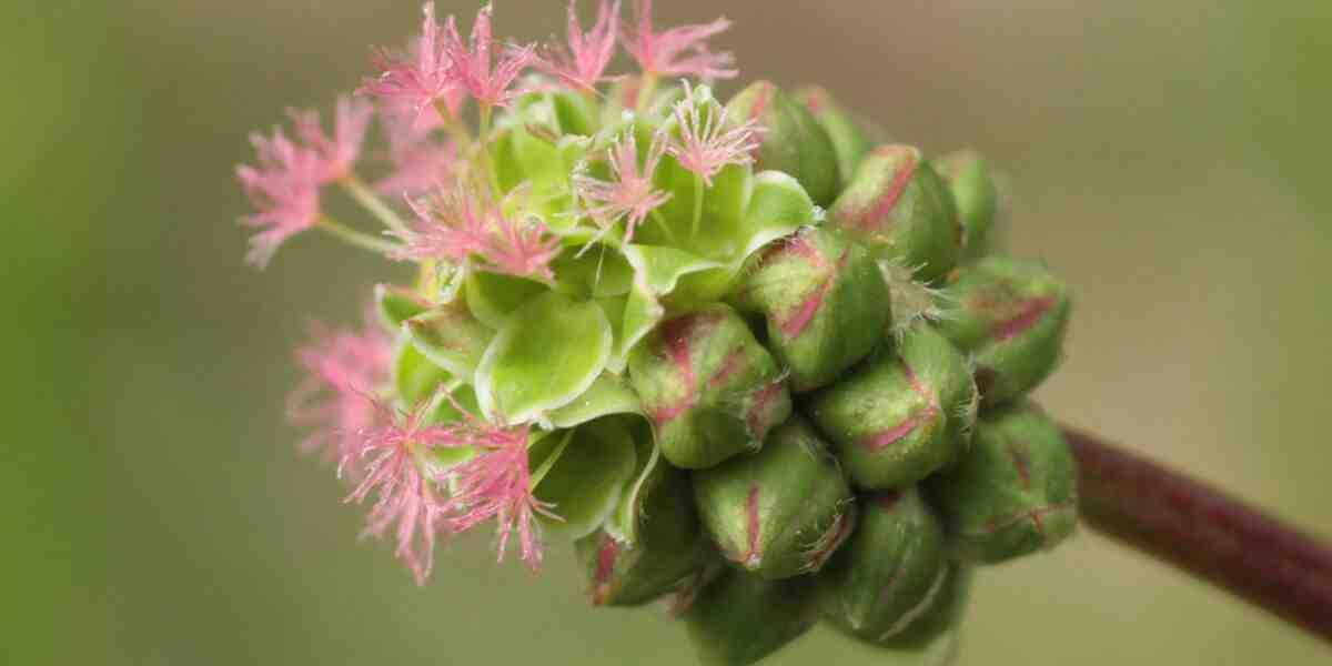 Quelles sont les plantes médicinales ?