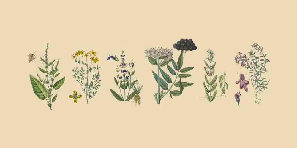 Comment éliminer les ingrédients actifs des plantes?