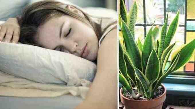 La camomille vous aide-t-elle à dormir?