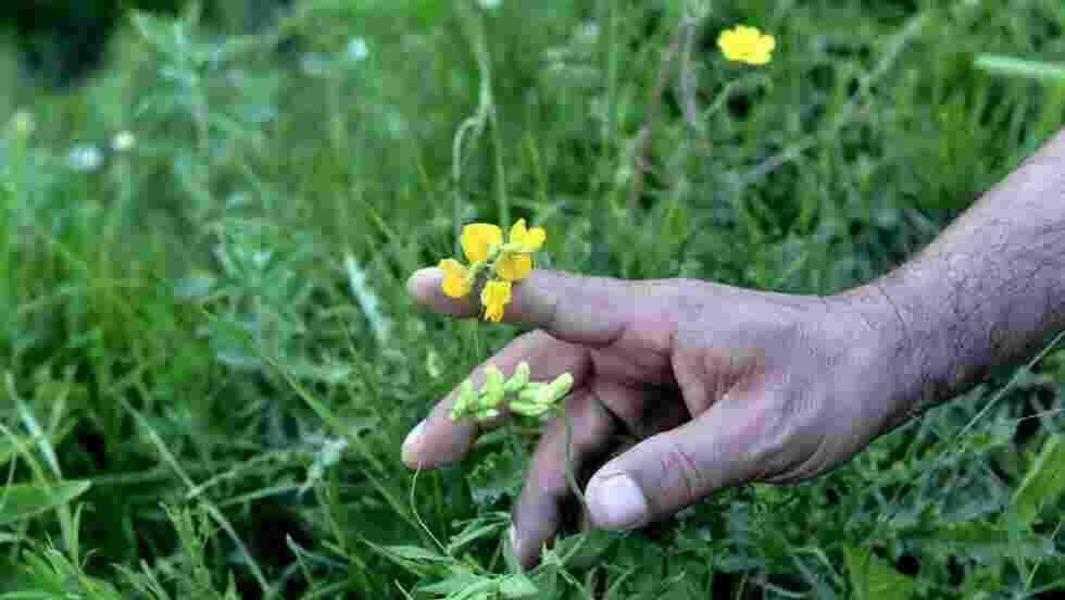 Pourquoi les gens se soignent avec les plantes médicinales ?