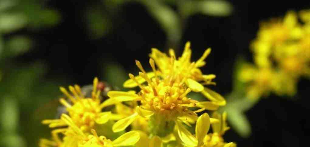Quelles sont les plantes médicinales?