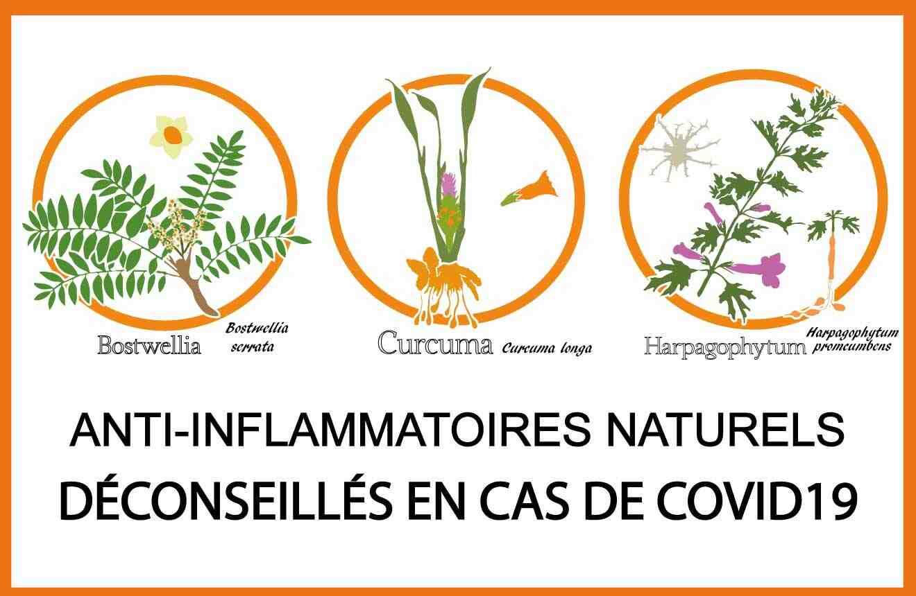 Quel est le meilleur Anti-inflammatoire naturel ?
