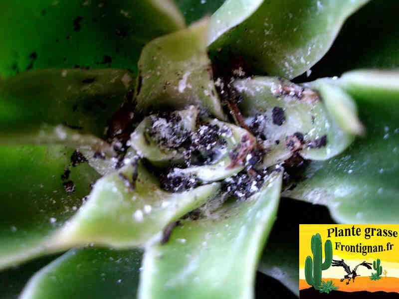 Comment enlever les parasites sur les plantes ?