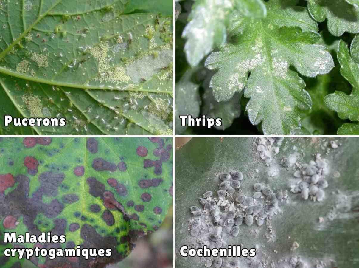 Comment se débarrasser des araignées dans les plantes?