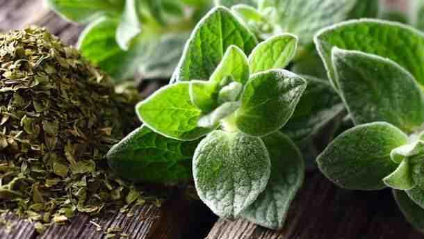 Comment utiliser les plantes médicinales?