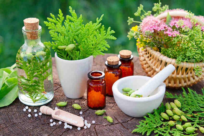 Que sont les plantes médicinales?