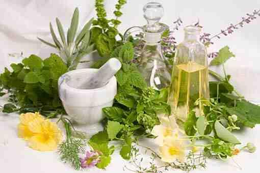 Quelles sont les différentes parties des plantes utilisées en phytothérapie ?