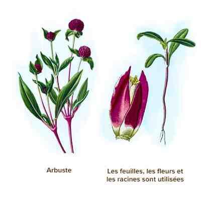 Quelles sont les différentes utilisations des plantes?