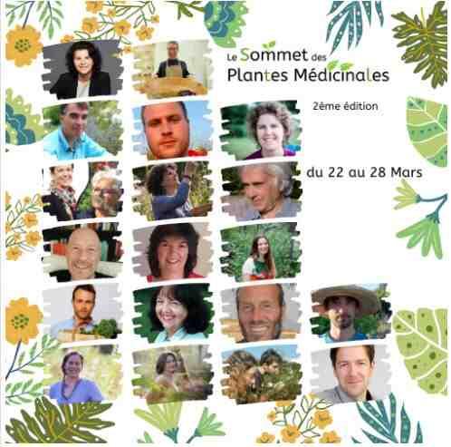 Quelles sont les principales façons d'utiliser les plantes en phytothérapie?