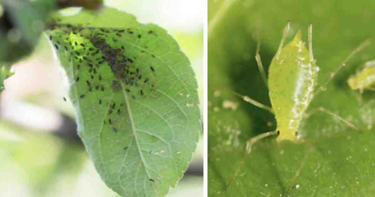 Comment éliminer les insectes des plantes ?