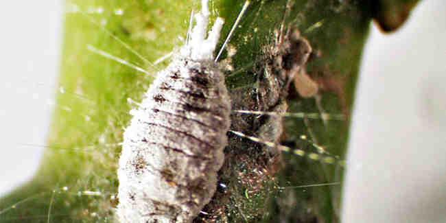 Comment eliminer les parasites des plantes ?