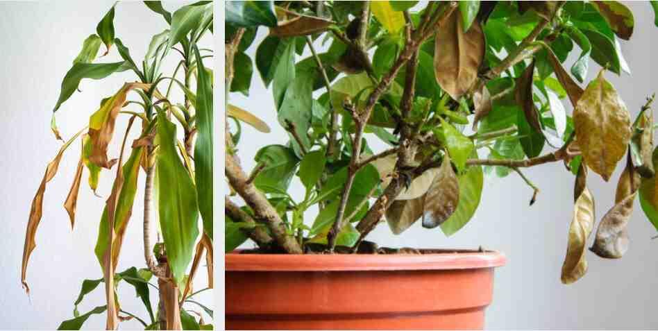 Comment entretenir les plantes d'intérieur ?