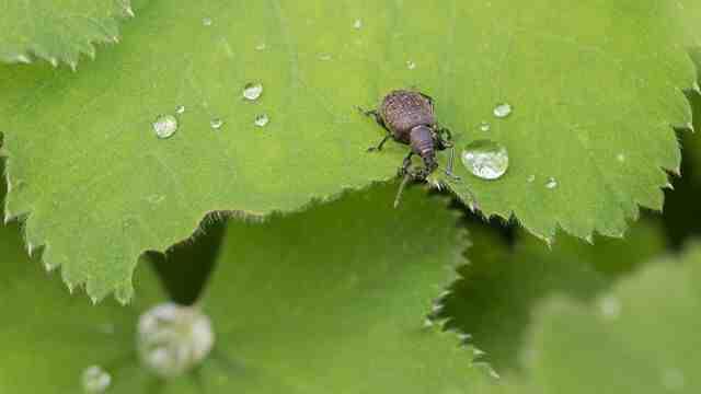 Comment garder un scarabée ?