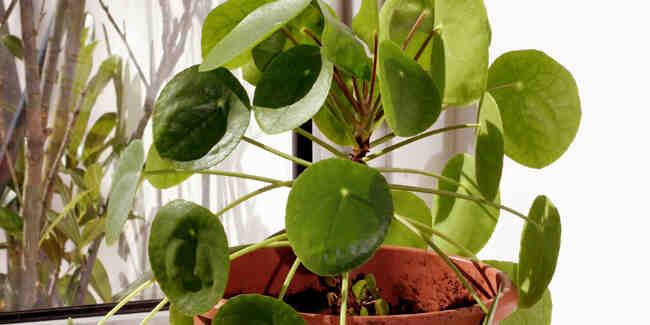 Comment prendre soin d'une plante ?