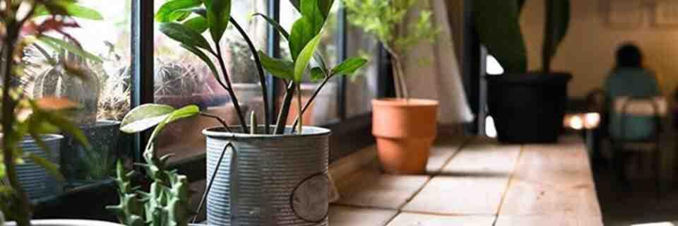 Comment redonner vie à une plante verte ?
