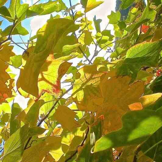 Comment rendre les feuilles d'une plante à nouveau vertes ?