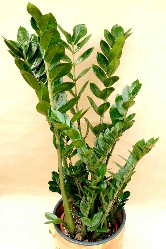 Comment sauver une plante en train de mourir ?