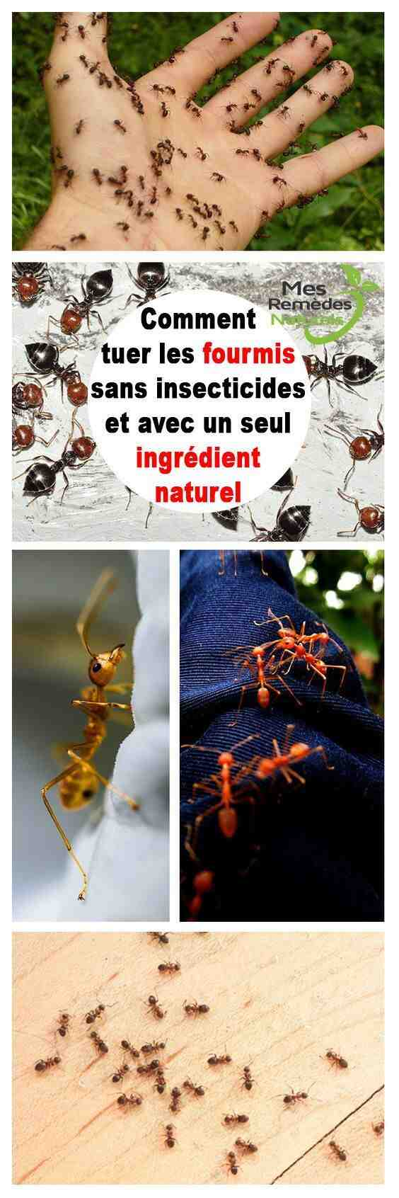 Comment se débarrasser des insectes dans la maison ?