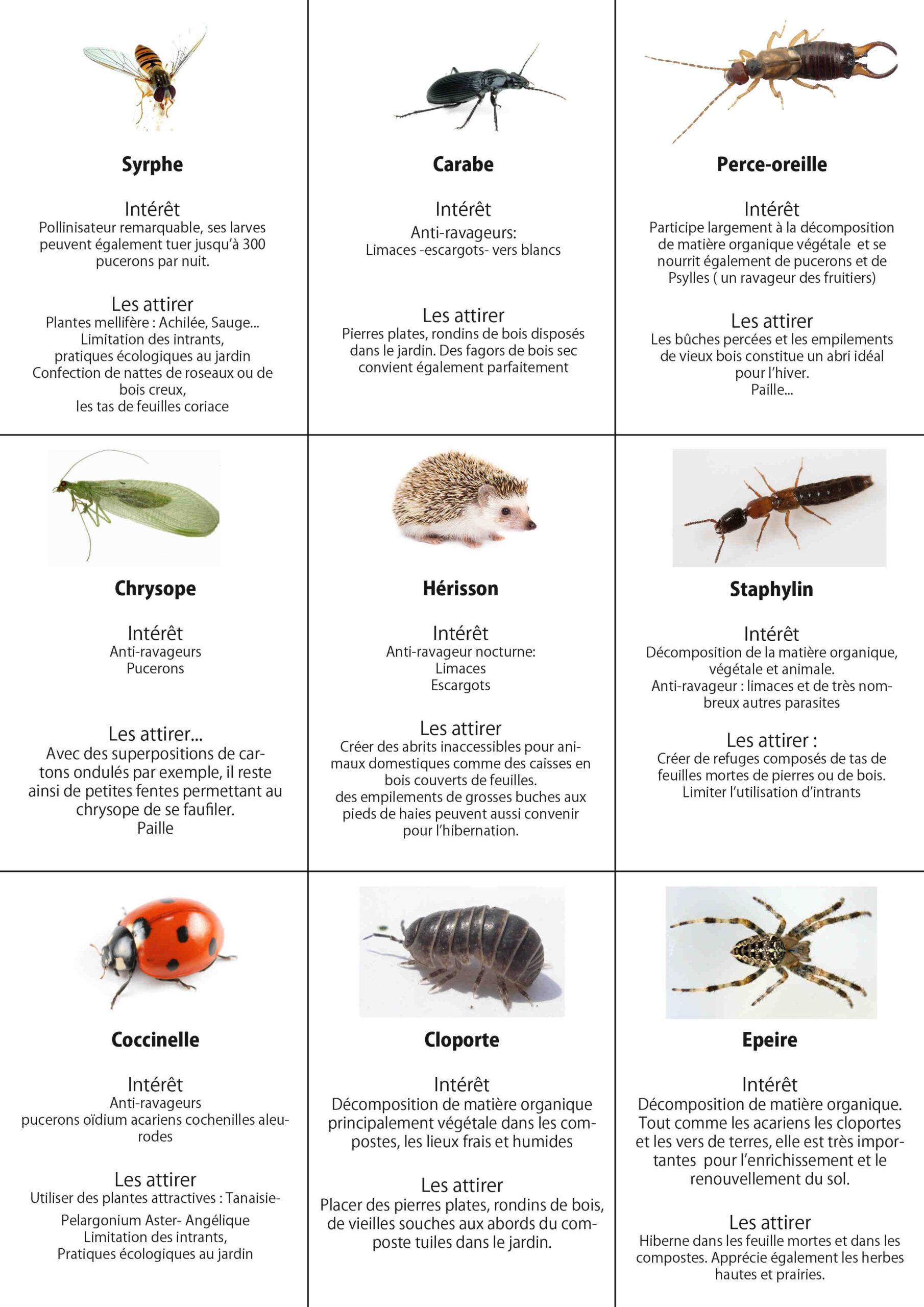 Comment se débarrasser des insectes sur les plantes ?