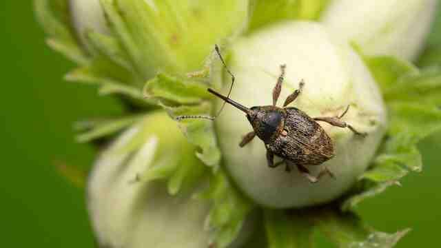 Comment se débarrasser des parasites dans le jardin?