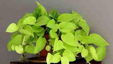 Comment se débarrasser des parasites des plantes d'intérieur?