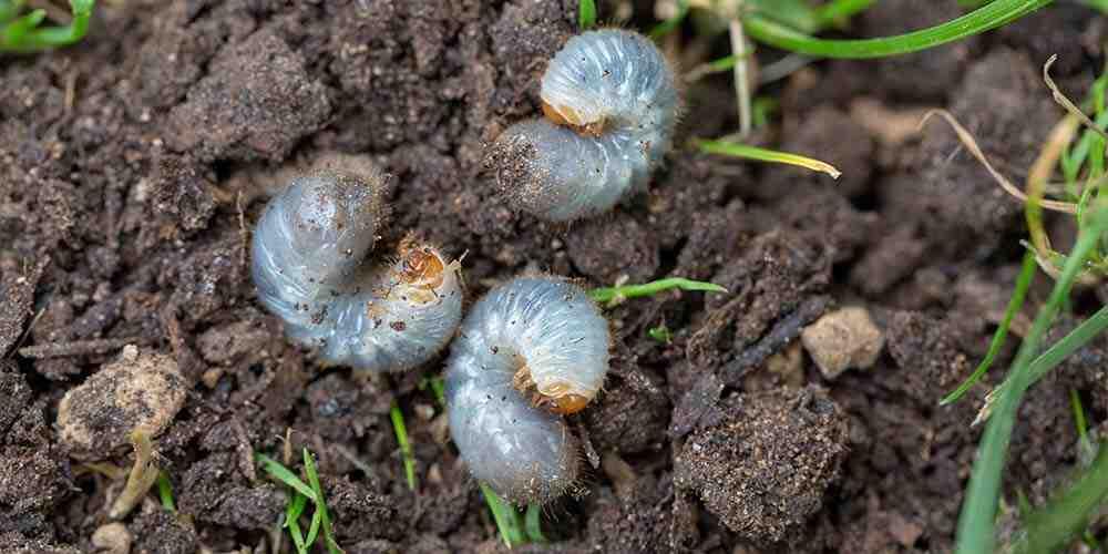 Comment se débarrasser des parasites sur les plantes?