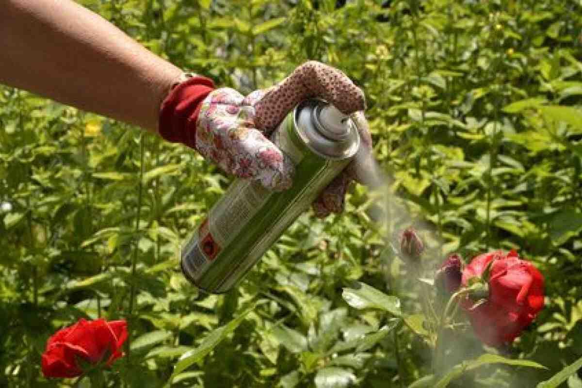 Comment se débarrasser des pucerons de manière naturelle ?