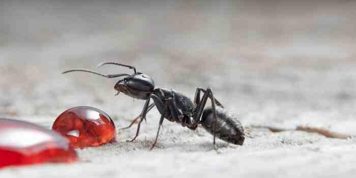 Comment tuer des insectes sans insecticide ?