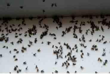 Pourquoi ai-je autant de mouches dans la maison ?