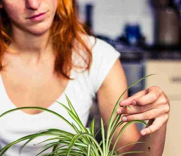 Pourquoi les feuilles d'une plante jaunissent ?