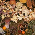 Quelles sont les maladies causées par les champignons ?