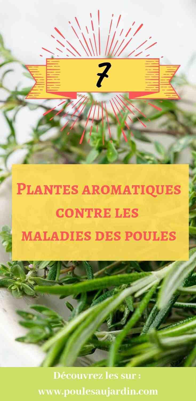 Quelles sont les maladies des plantes ?