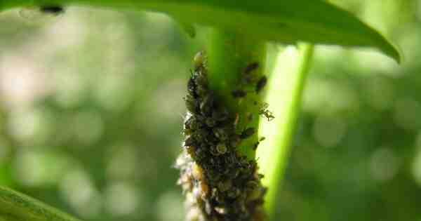 Quels sont les parasites des plantes ?