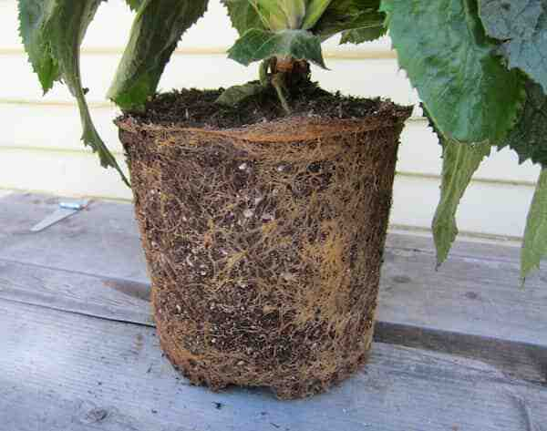 Comment accélérer la croissance d'une plante ?