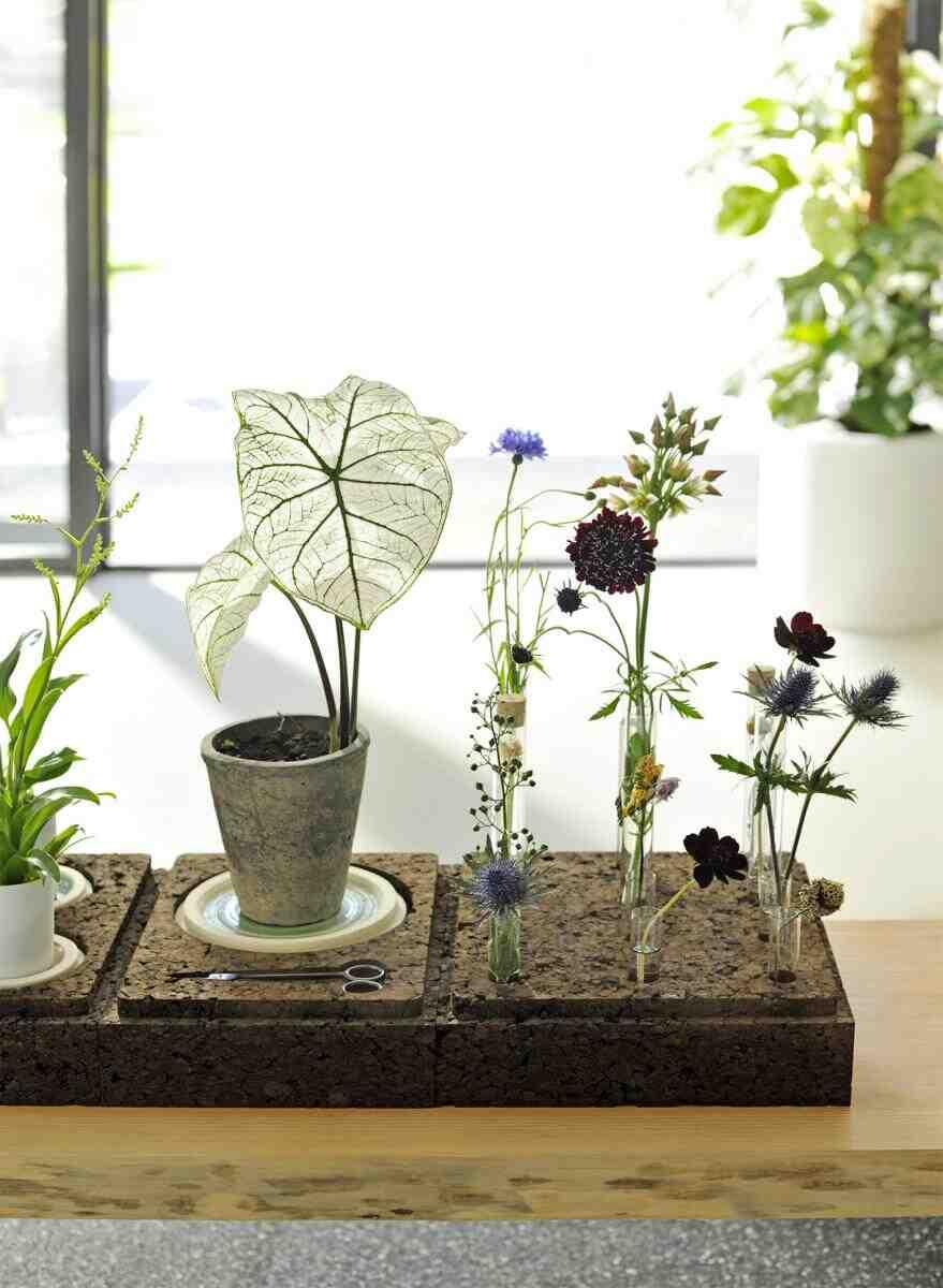 Comment donner un coup de pouce à vos plantes ?
