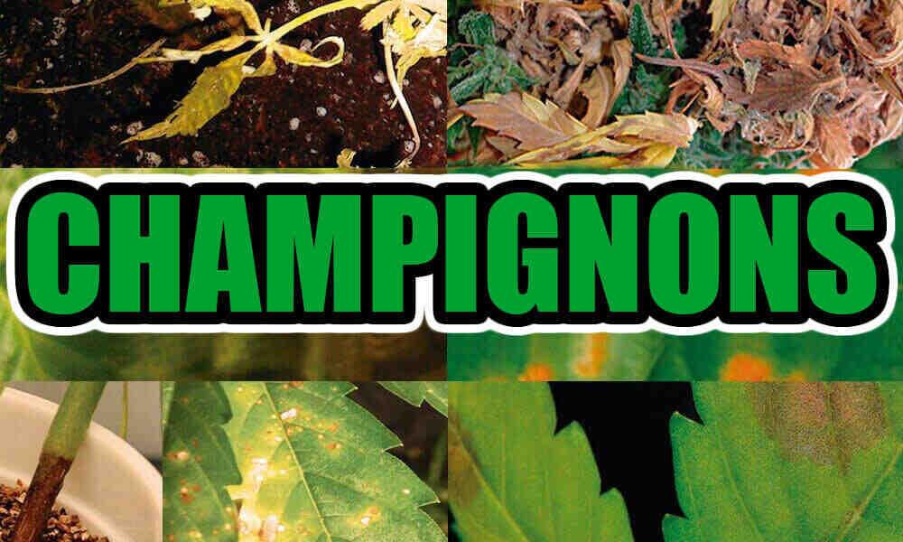Comment éliminer les champignons de la terre ?