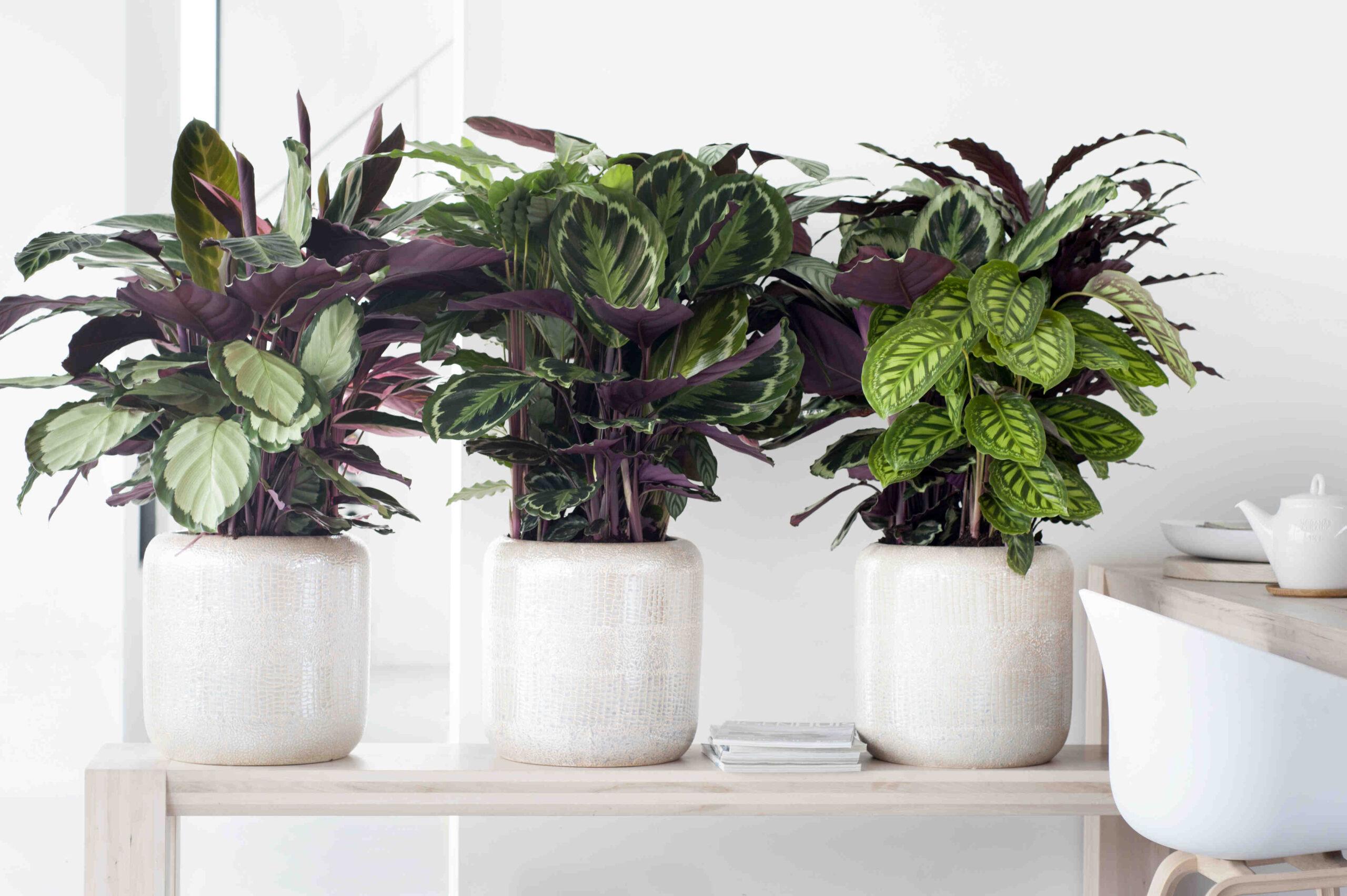 Comment éliminer les parasites des plantes ?